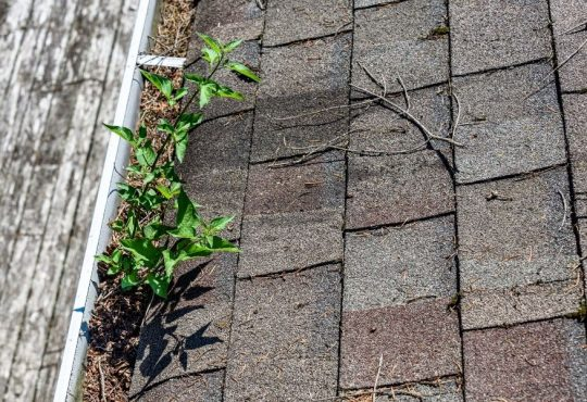 The Importance Of Roof Maintenance in Canton Michigan